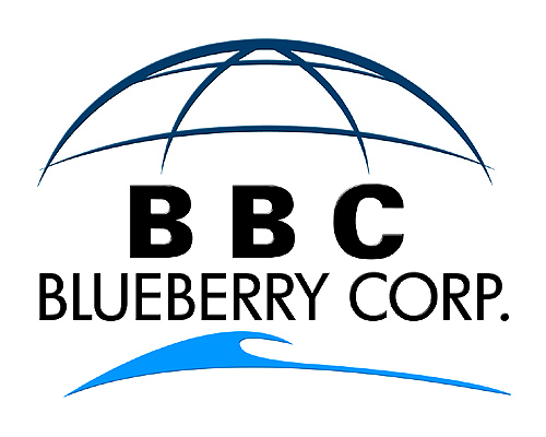 Logo Development | Blueberry Corporation